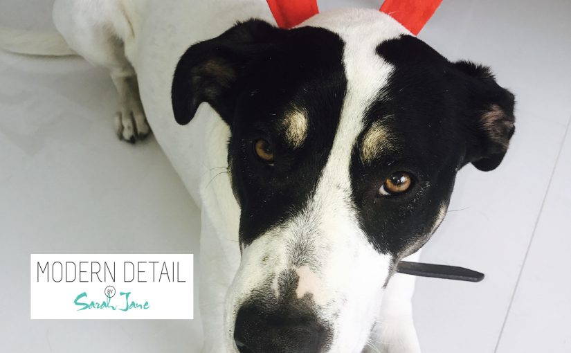 Sarah Jane needs your Help to find Star a Home Before Xmas