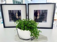Sophisticated Art Prints in Frame - Faceless Xg and Faceless Xg inverted by Australian Artist sarah Jane